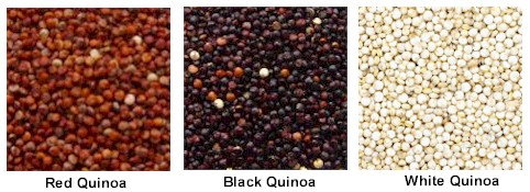 three color quinoa-buy quinoa online