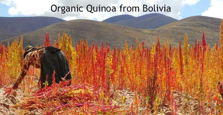 Organic Quinoa from Bolivia